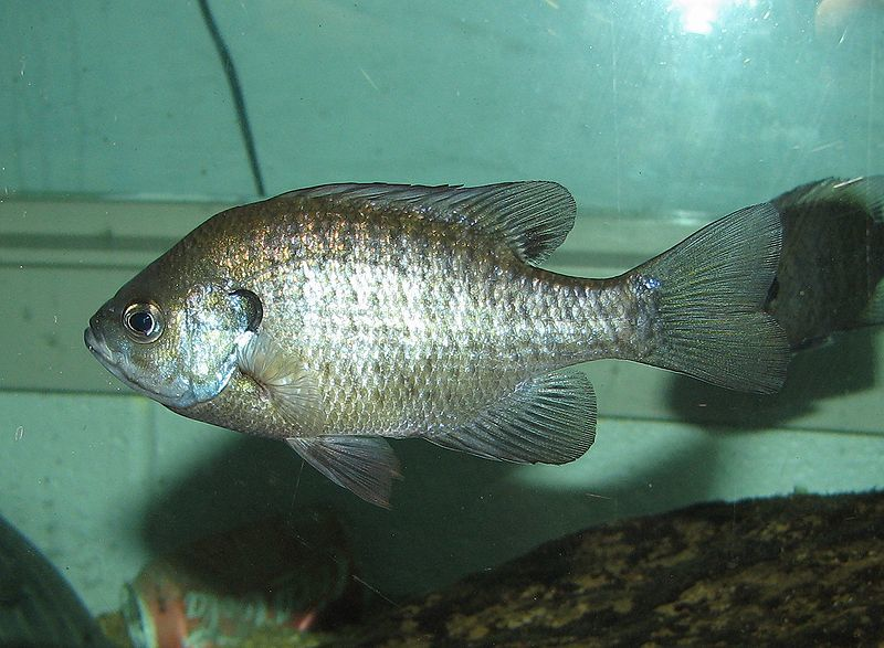 cool looking pet fish