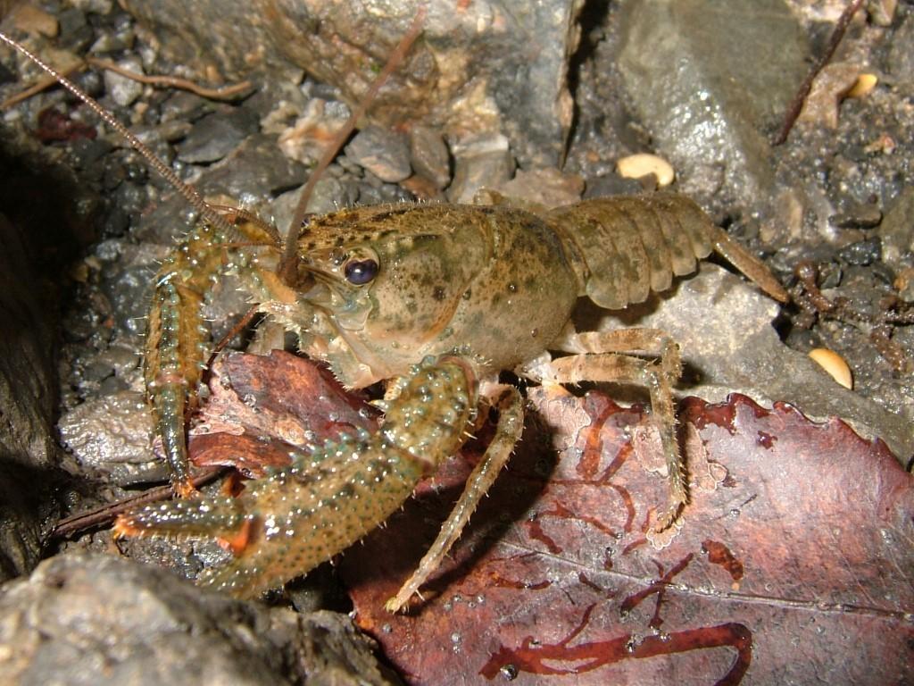 How_to_Catch_Crawfish