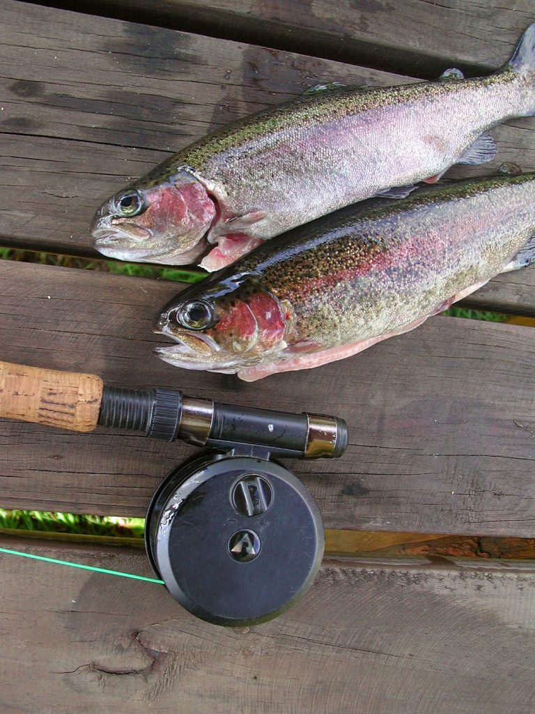 trout fishing tips 3