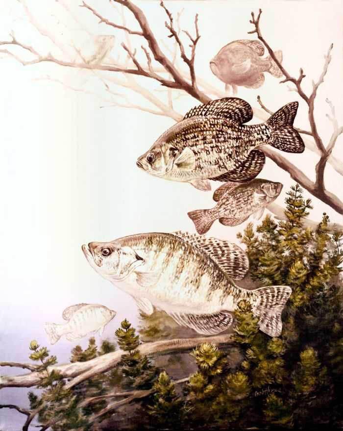 Crappie_Fishing_Tips