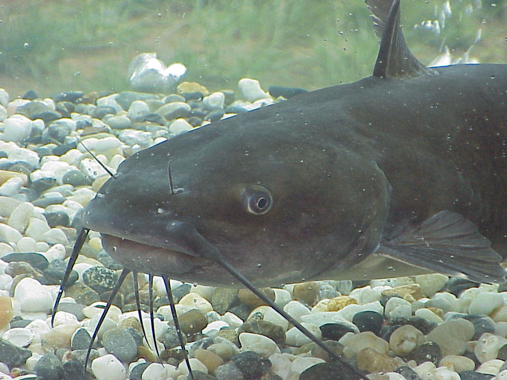 How_to_Catch_Catfish