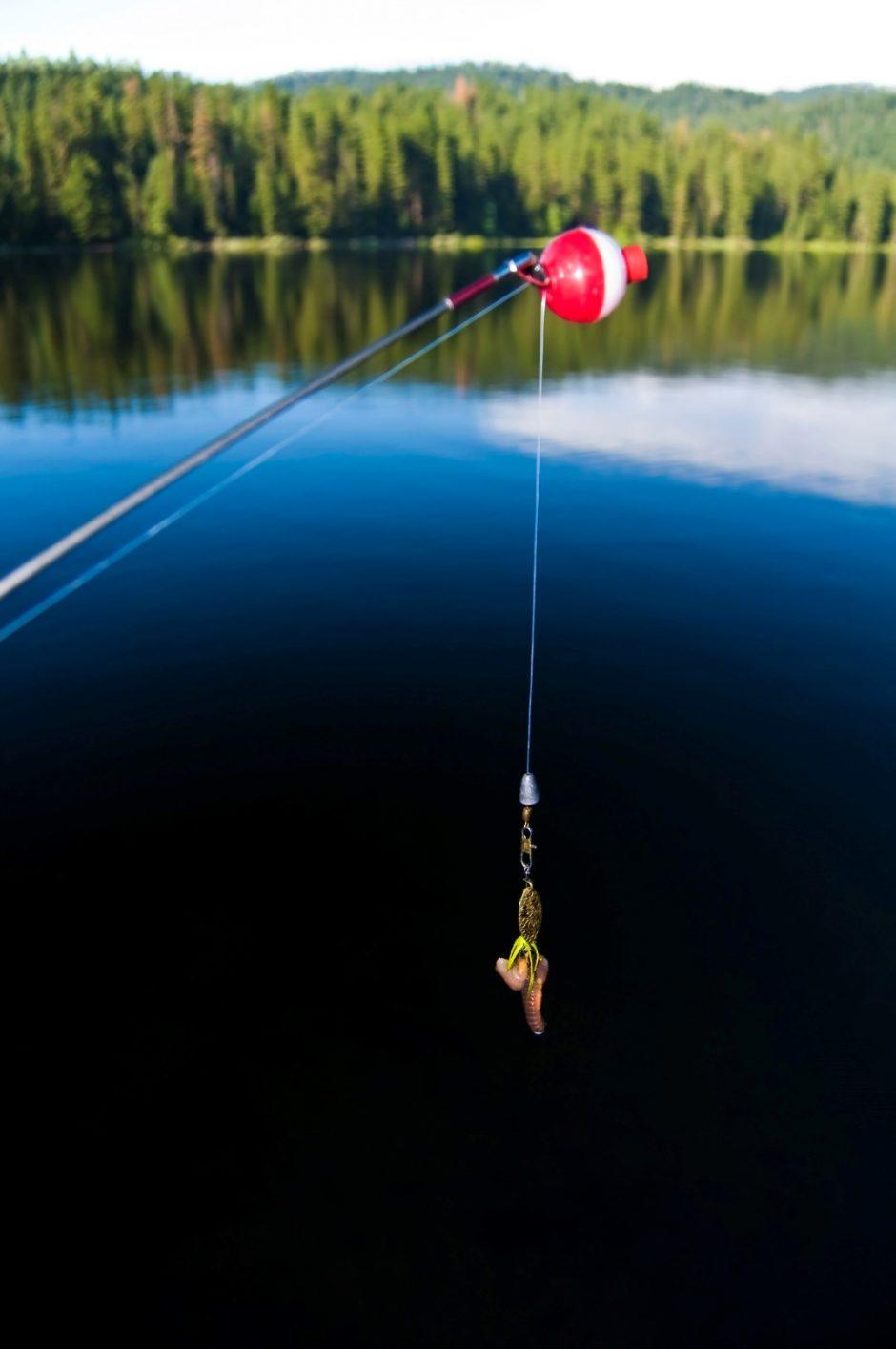 soft plastic baits 1