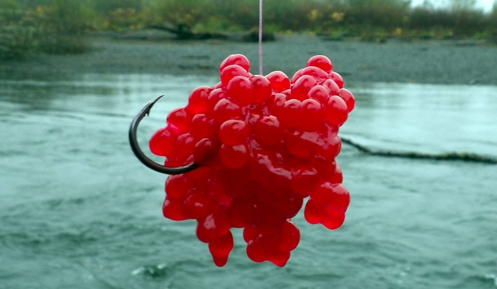 Effective Trout Bait of Salmon Eggs, Nightcrawlers, Christmas Trees and Crickets