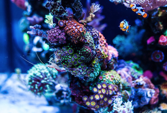 Important Tips with Marine Aquaria