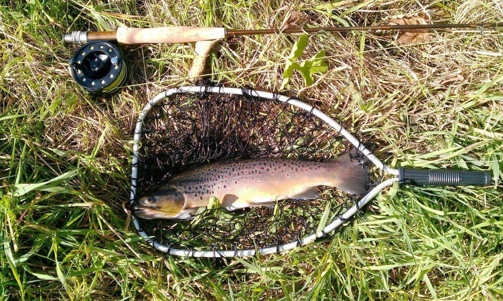rainbow trout habitat