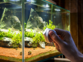 What To Do If Your Aquarium Is Leaking?