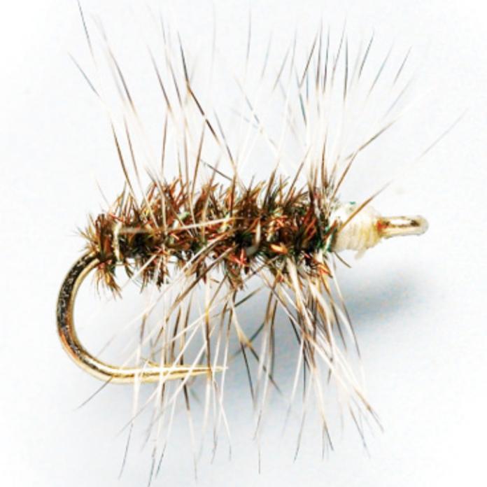 Griffith's Gnat Fly